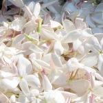 flower-2069140_960_720